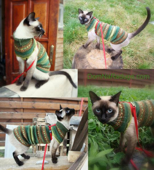 свитер для кошки