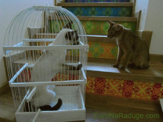 кошки с птичьей клеткой