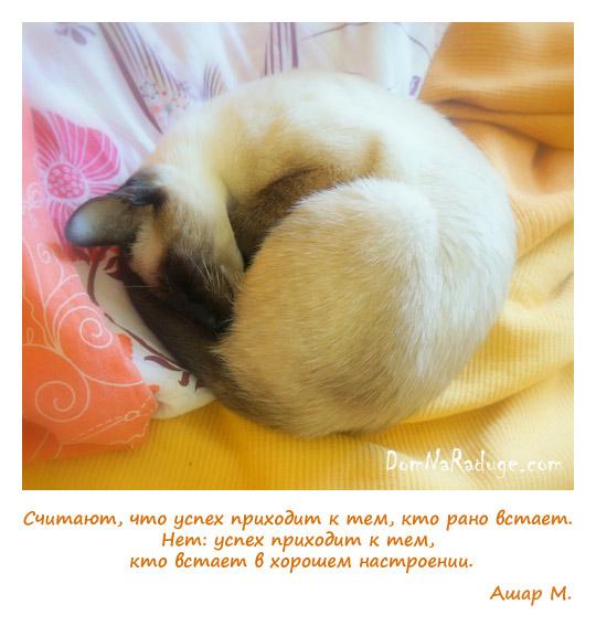 кошкины сны