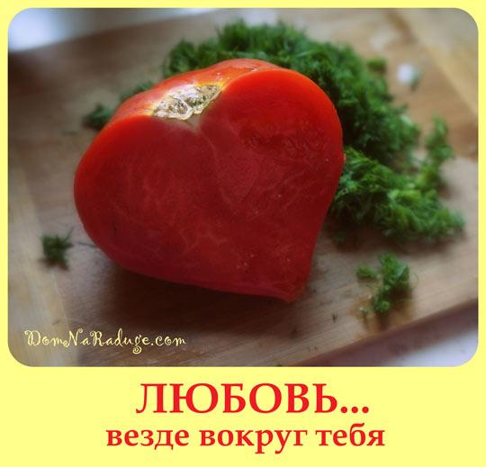 помидорная любовь