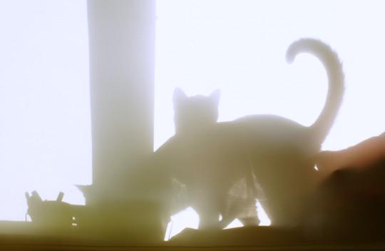 кошачий театр теней