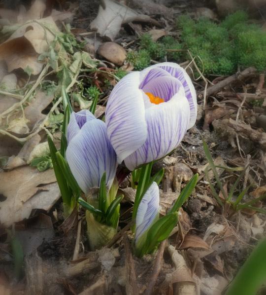 17 мгновений моей весны...